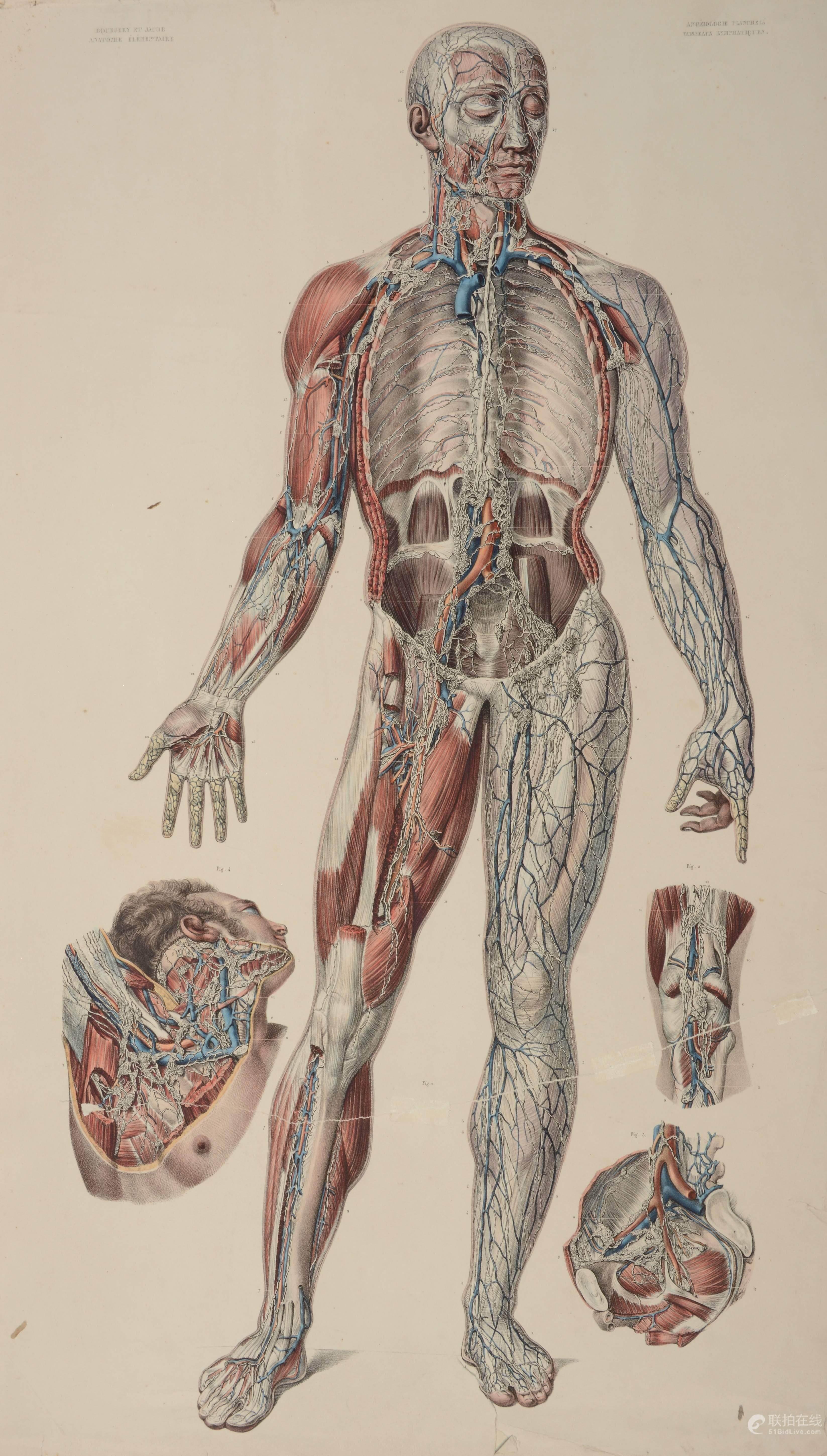 Ungewöhnlich Anatomie Lehraufträge Bilder - Menschliche Anatomie ...