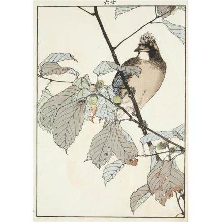IMAO KEINEN (1825-1924), , 11 BIRD AND FLOWER COLOR WOODBLOC