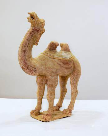 Camel - Tang dynasty - China - 7th - 10th century