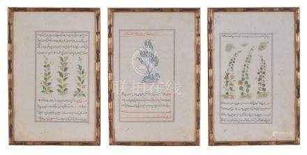 Three illustrated leaves depicting flowering plants including Hemlock (sarv)