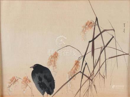 WATANABE SEITEI (1851-1918, Japan) MOORHEN IN THE RICE FIELD