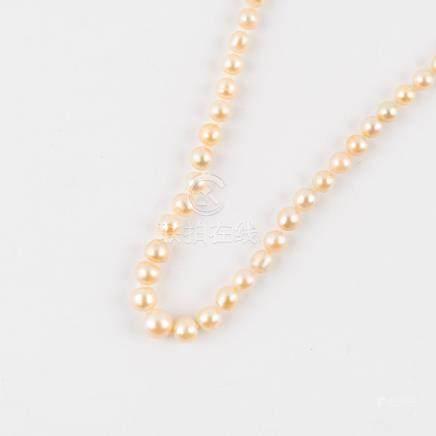 Collier en chute de 117 perles (probablement fines) de couleur crème