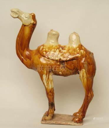 Chameau blatérantTerre cuite à glaçure ocre et caramelChine, Dynastie Tang 618-907 ap. J.-C.
