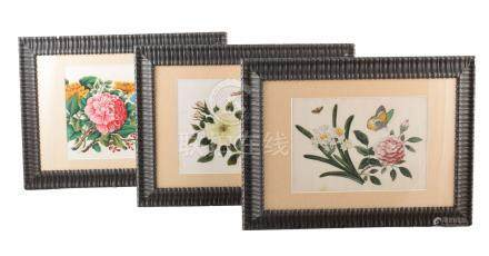 Twelve late 19th century Chinese ricepaper paintings of floral design. In modern, glazed frames.