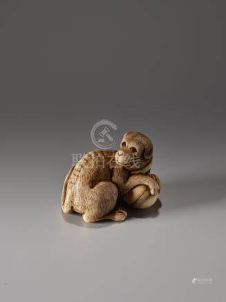 AN IVORY NETSUKE OF A DOG WITH A BALL BY IKKO