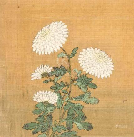 AlbumblattChina. Farbe auf Seide. Weisse Chrysanthemen. Montiert, stockfleckig. 26,5×26 (37×30,