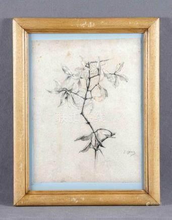 "GESSA, SEBASTIÁN (1840-1920). ""Botánica"". Dibujo a carboncil"