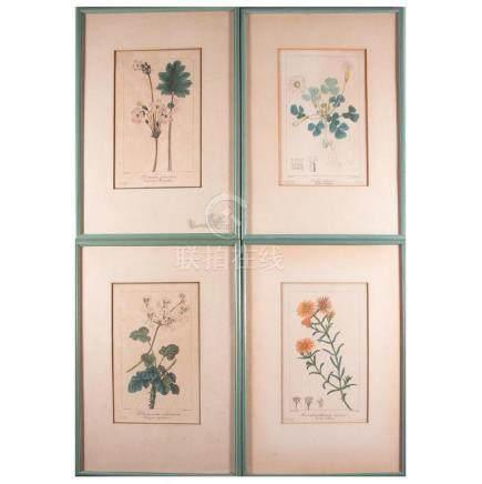 Set of four hand colored botanicals.