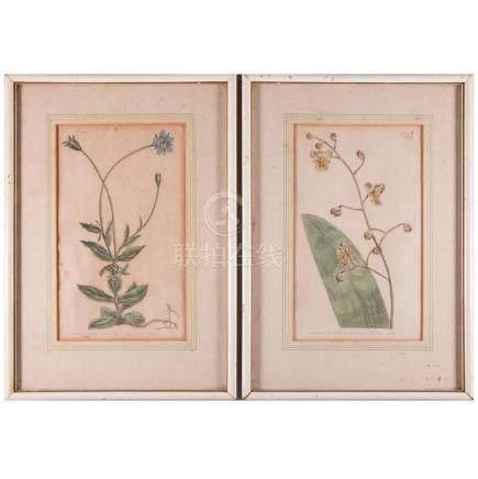 A pair of framed botanicals.