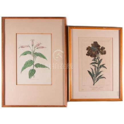 Two framed hand colored etchings.