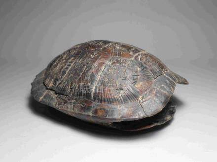 TURTLE SHELL WITH ANCIENT INSCRIPTION