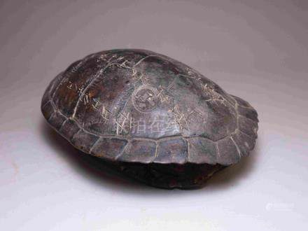 OLD TURTLE SHELL WITH ANCIENT INSCRIPTION