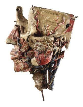 十九世紀   法國 Louis Thomas Jerome Auzoux(1797-1880年)製紙雕頭部解剖小模型