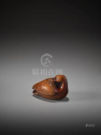 AN IMPORTANT AND LARGE WOOD NETSUKE OF A PREENING DUCK