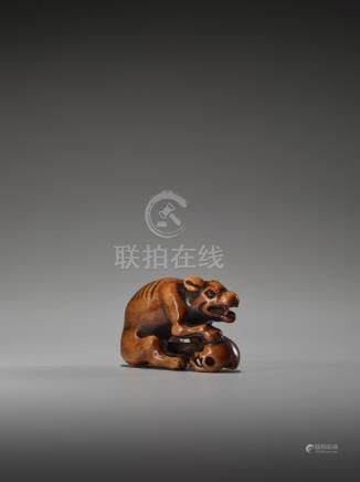 A POWERFUL WOOD NETSUKE OF A WOLF WITH A SKULL