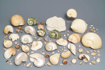 A collection of large sea shells and a white coral