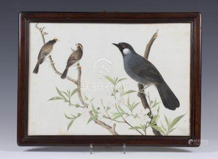 A Chinese school trade watercolour painting on paper, late 18th century, depicting a magpie and