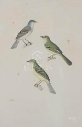 Nicolas HUET LE JEUNE (1770-1830)  Etude d'oiseau, Gobe-moucherons mâle.  Aquar