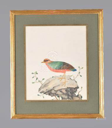 A pair of Chinese export watercolours of birds