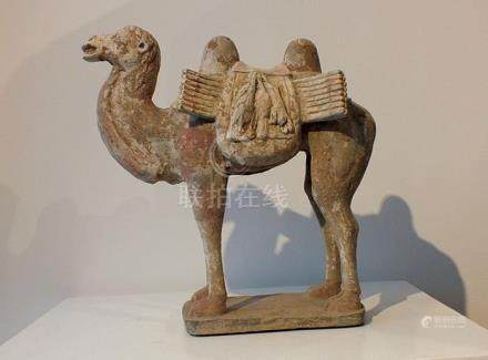 Chinese Gray Pottery Bactrian Camel, - H. 30 cm, TL Tes