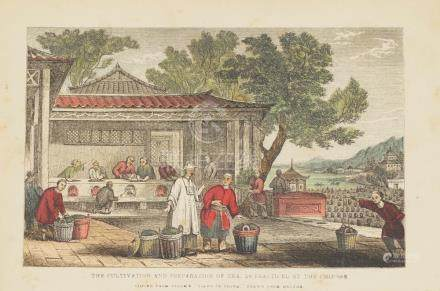 Animated view Cultivation and Preparation Tea China 1850