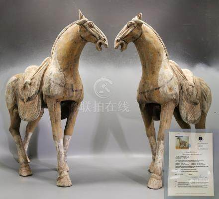 EXTRA LARGE PAIR OF CHINESE TANG DECORATED TERRACOTTA HORSE- TL- tested