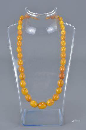 Butterscotch Amber Necklace containing 32 Graduating Ovoid Beads, approx. 41 grams