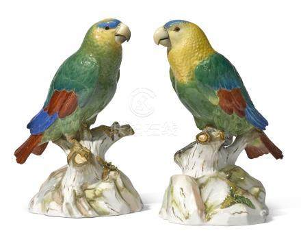 A pair of Meissen models of South American parrots, circa 1890