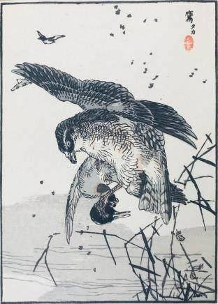 GAFU. Hawk hunting a duck.