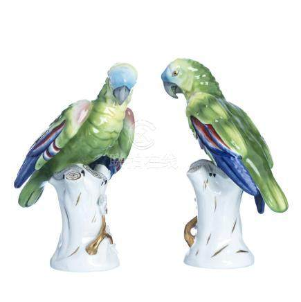 Pair of Parrots, Vista Alegre