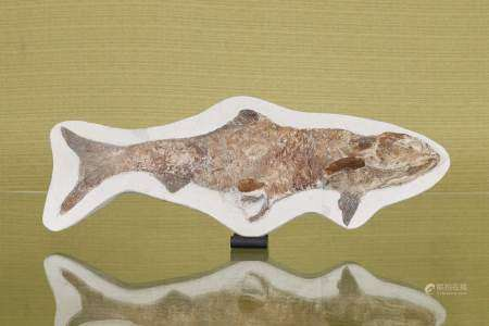 Fossile de poisson sur plaque