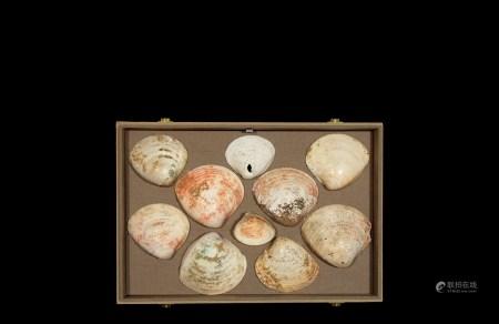 商•朱砂扇贝币一组十枚