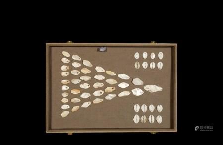 周•晋国佩戴式、鲁国蚌贝币一组五十四枚