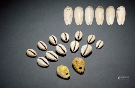 夏-商•天然贝币一组二十枚