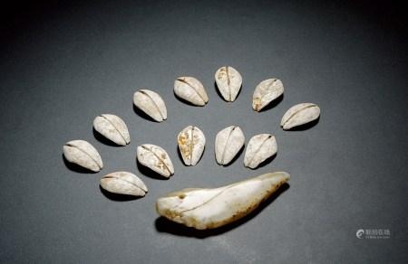 商-周•贝币、龙形币一组十三枚