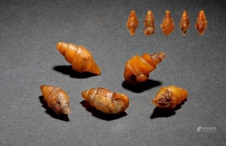 商•玉化螺币一组五枚
