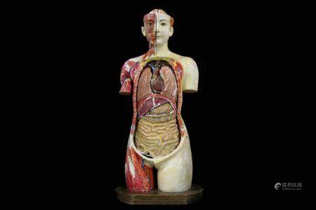 A FINE 1930'S JAPANESE LIFE-SIZE ANATOMICAL MODEL TORSO OF T