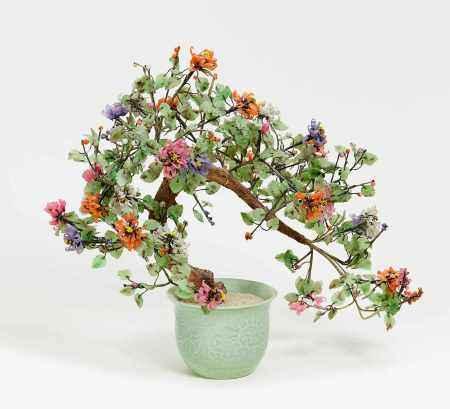 LARGE FLOWERING JADE TREE.
