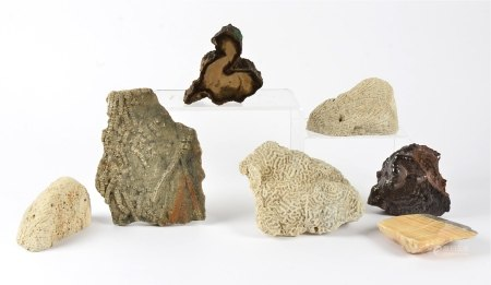 A small collection of fossils and crystals, including a piece of hematite, 8cm x 11.5cm,