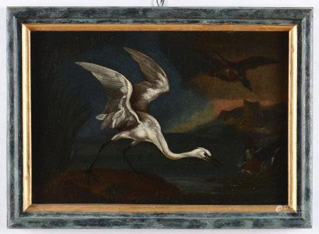 Scuola francese del XVIII secolo, Airone cinerino - olio su tela, cm 23x34 -