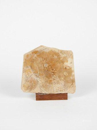Relief.Profil de Déesse ou reine.Calcaire ou autre.Style de la Basse Epoque. L [...]