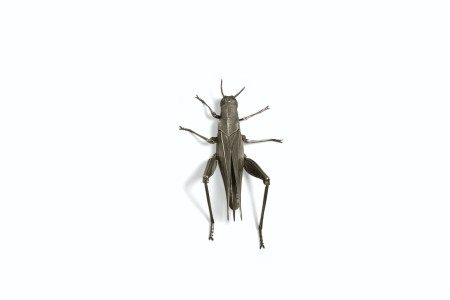 A SILVER ARTICULATED SCULPTURE OF A GRASSHOPPER MEIJI-TAISHO PERIOD (EARLY 20TH CENTURY), SIGNED MUNEYOSHI (TANAKA TADAYOSHI; ?-1958)