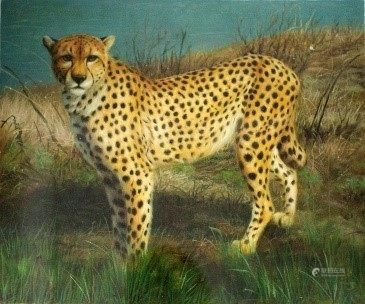 Oil Painting - Animal  - Montreal Artist
