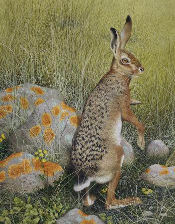 "Ken Lilly (1929 - 1996) ""Hare"""