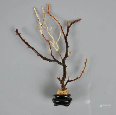 Gorgone noir.Schwartze gorgonie ,Black gorgonie.Sur une gorgone rouge.Henv 10cm.