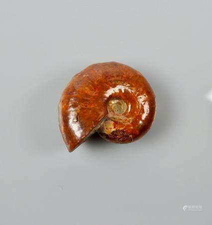 Ammonite opalisée rouge.Crétacé.Env 80 millions d'années.Madagascar.L:3cm.