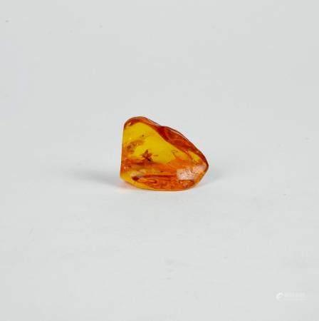 Morceau d'ambre de la baltique comportant un insecte 4 cm Environ 45 millions d'années