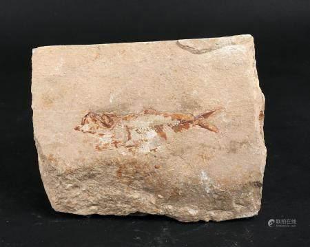 Plaque fossile représentant un poisson 13 cm