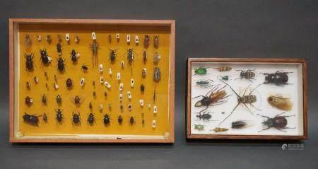 2 coffrets contenant une collection de coléoptères
