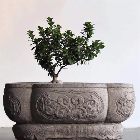 清代 海棠盆
